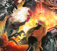 PASTIGOL Permainan Sabung Ayam